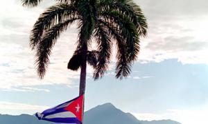 Nous sommes de là où s'élève le palmier